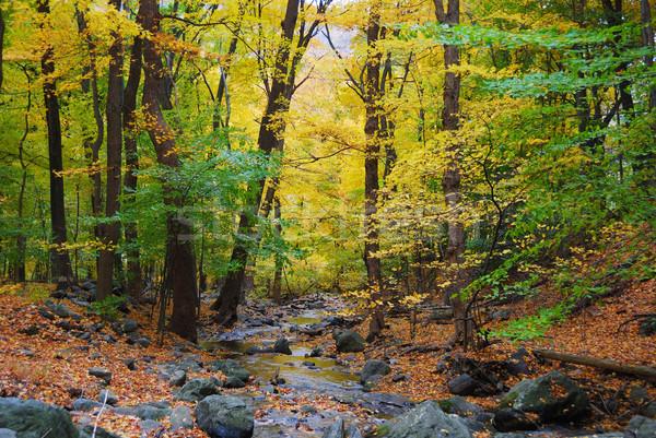 осень лесу ручей желтый клен деревья Сток-фото © rabbit75_sto