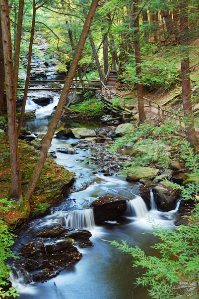 Floresta enseada caminhadas madeira ponte trilha Foto stock © rabbit75_sto