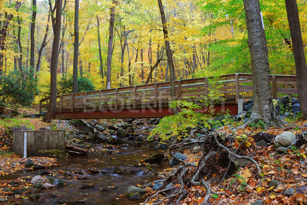 Najaar hout brug kreek bos Geel Stockfoto © rabbit75_sto