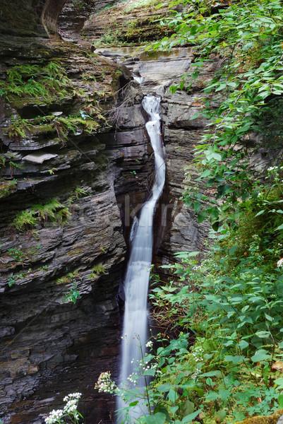 Waterfall in woods Stock photo © rabbit75_sto