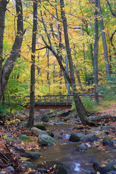 Fa híd patak ősz erdő citromsárga Stock fotó © rabbit75_sto