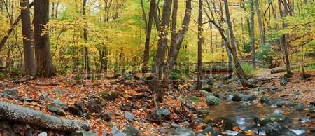 Najaar hout brug Geel esdoorn bos Stockfoto © rabbit75_sto