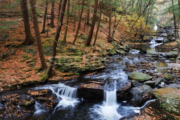 осень ручей лесу листва походов тропе Сток-фото © rabbit75_sto