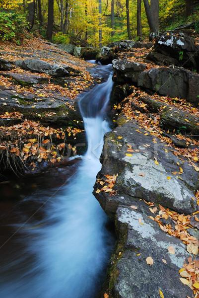 ősz patak közelkép citromsárga juhar fák Stock fotó © rabbit75_sto