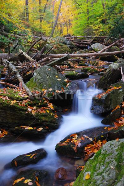 creek in mountain with Autumn yellow maple trees Stock photo © rabbit75_sto