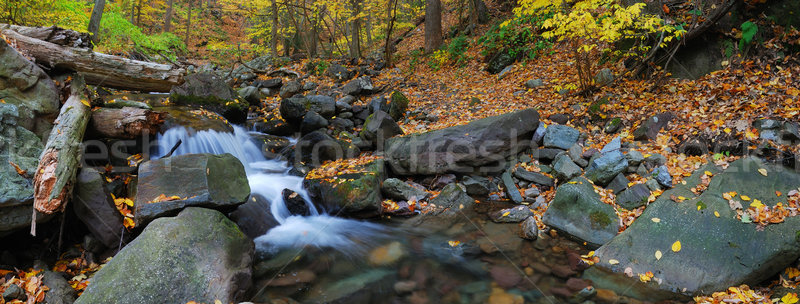 осень ручей Панорама желтый клен Сток-фото © rabbit75_sto