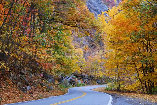 Foto stock: Outono · estrada · mata · colorido · árvore
