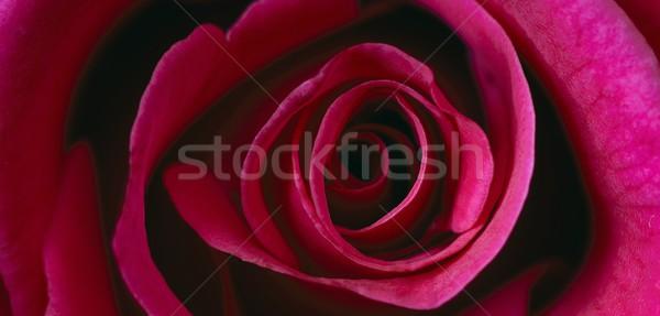 красную розу текстуры свадьба закрывается природы искусства Сток-фото © rabel