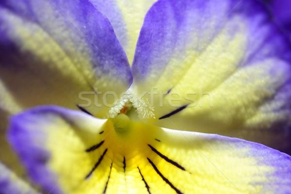 желтый Purple весны природы цвета завода Сток-фото © rabel