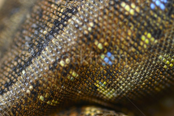 Lézard peau nature serpent blanche animaux Photo stock © rabel