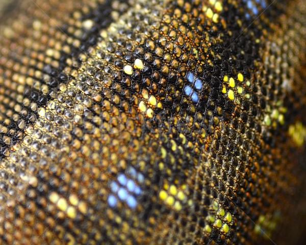 Kertenkele cilt arka plan deri yılan beyaz Stok fotoğraf © rabel