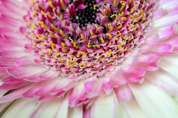 Fleur mariage résumé design jardin été Photo stock © rabel