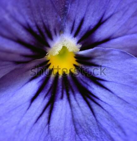 Fleur printemps nature beauté Photo stock © rabel