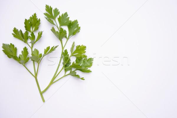 Persil isolé vert vie usine manger Photo stock © rabel