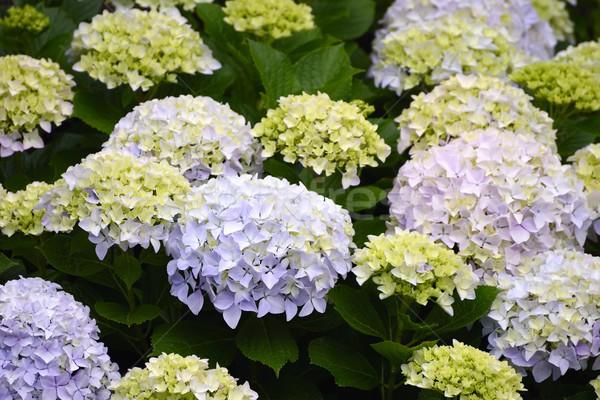 цветок природы лист лет зеленый завода Сток-фото © rabel