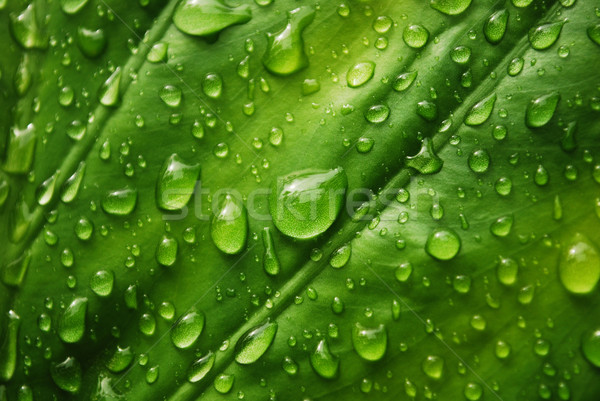Water drops on green leaf Stock photo © radoma