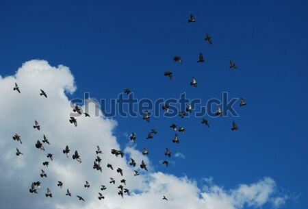 Kuşlar gökyüzü bulutlar arka plan uzay güvercin Stok fotoğraf © radoma
