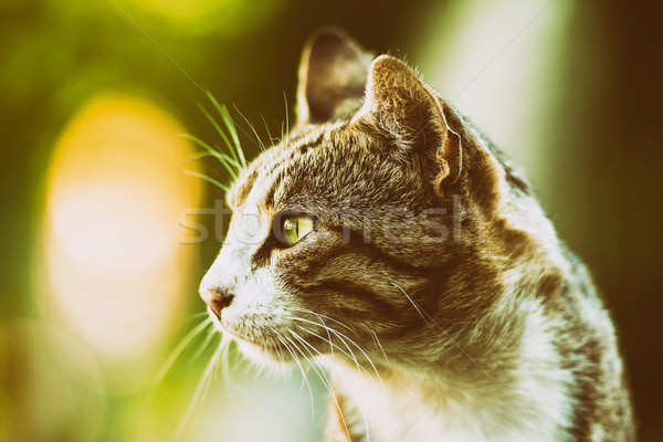 Gato doméstico perfil retrato cara ojos naturaleza Foto stock © radub85