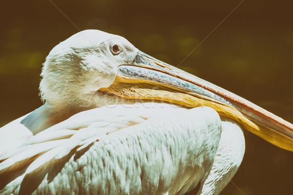Sauvage blanche oiseau portrait eau fond Photo stock © radub85