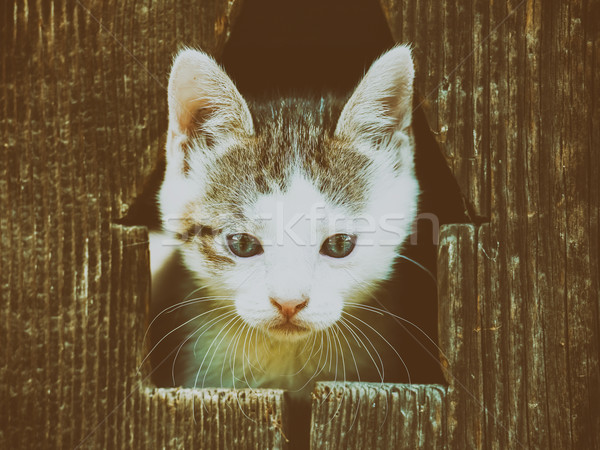 Small Baby Kitty Cat Portrait Stock photo © radub85