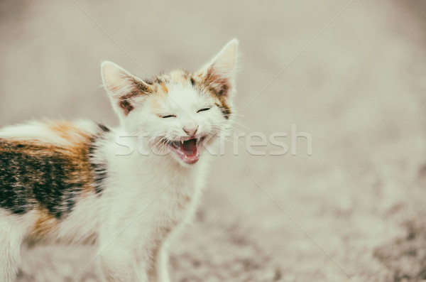 Cute Cat Meowing With A Funny Laughing Face Stock photo © radub85