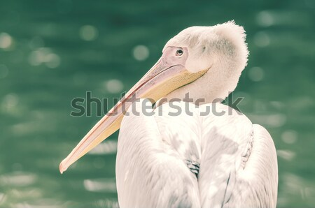 Sauvage portrait océan oiseau plumes rétro Photo stock © radub85