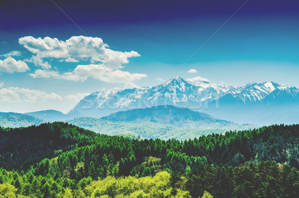 Carpathian Mountains Landscape With Blue Sky In Summer Stock photo © radub85