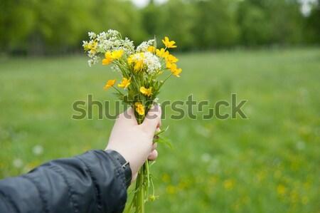 Boeket handen hand gras natuur Stockfoto © raduga21