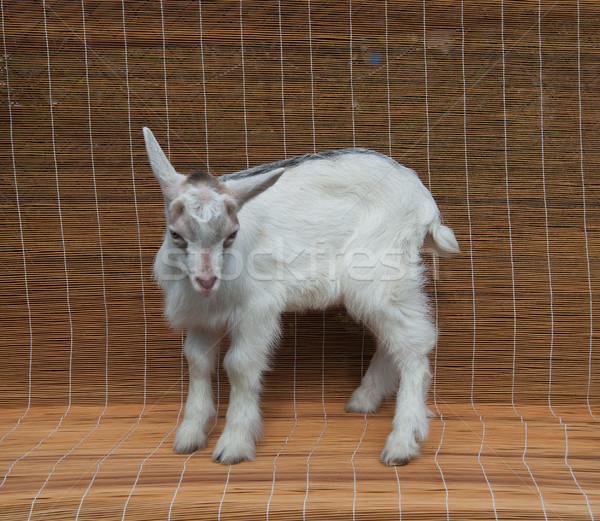 Jeden dziecko mały biały beżowy charakter Zdjęcia stock © raduga21