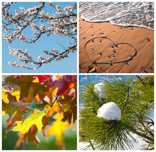 Négy évszak kollázs tavasz virág nyár tengerpart Stock fotó © rafalstachura