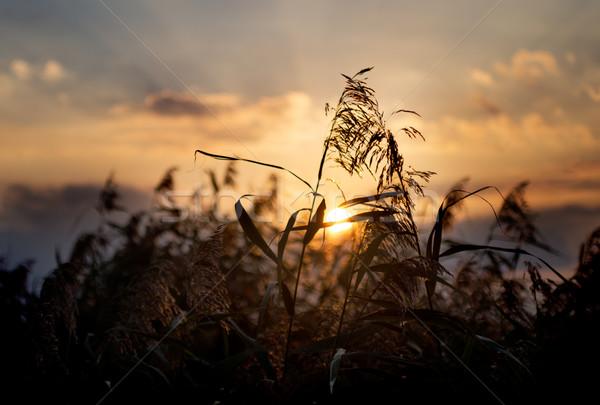 Coucher du soleil ciel paysage sauvage soft accent Photo stock © rafalstachura