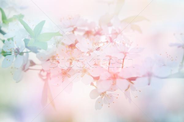 Photo stock: Fleurs · belle · fleur · résumé · peu · profond · arbre