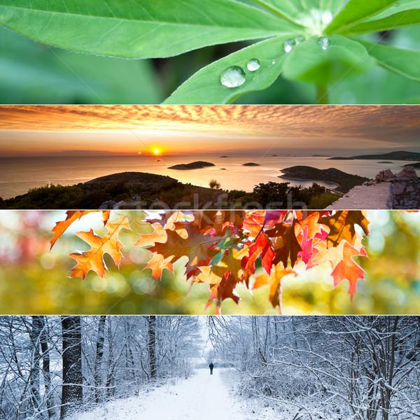 Cztery pory roku kolaż pozostawia wygaśnięcia widoku Zdjęcia stock © rafalstachura