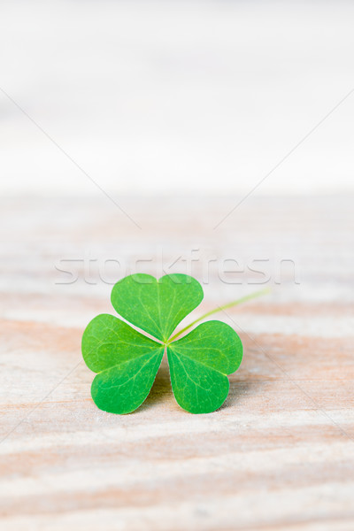 Shamrock on wooden table closeup with copy space Stock photo © rafalstachura