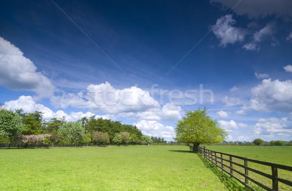 Fa zöld mező kerítés égbolt űr Stock fotó © rafalstachura