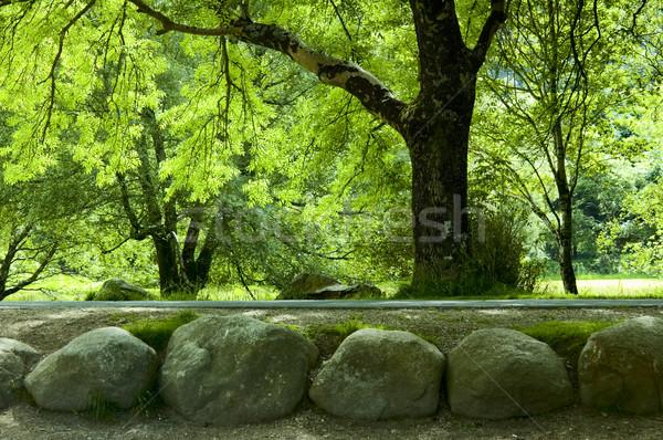 Arbres parc arbre laisse lumière du soleil Photo stock © rafalstachura