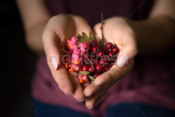 Woman holding wild rose hips in hands Stock photo © rafalstachura