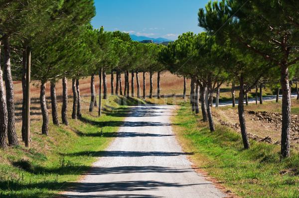 Camino rural ejecutando árbol callejón sol Foto stock © rafalstachura