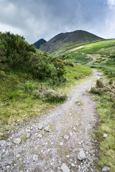 Mountain road in Ireland Stock photo © rafalstachura