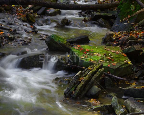 Yosun kapalı kaya güneş ışığı orta dere Stok fotoğraf © ralanscott