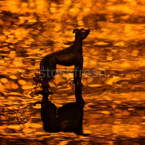 Cennet siluet köpek altın altın Stok fotoğraf © ralanscott