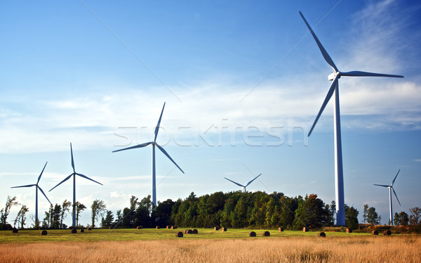 The Future is Blowing in the Wind Stock photo © ralanscott