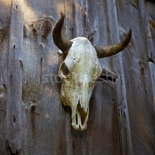 Inek kafatası asılı ahır kapı doku Stok fotoğraf © ralanscott