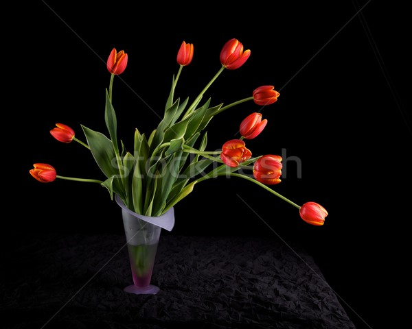 Lale siyah çiçekler Stok fotoğraf © ralanscott