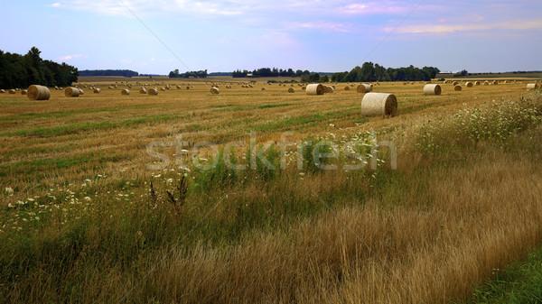 Saman hasat çiftlik alan tok sezon Stok fotoğraf © ralanscott