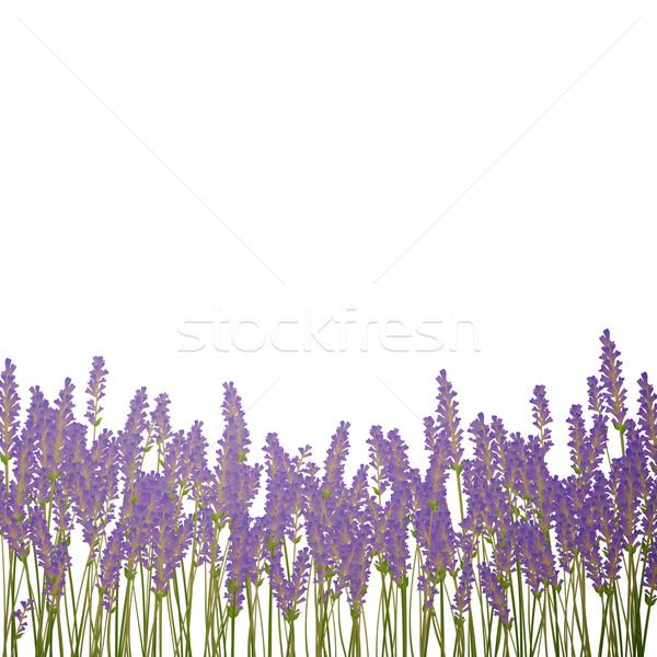 вектора цветок трава природы дизайна лист Сток-фото © RamonaKaulitzki