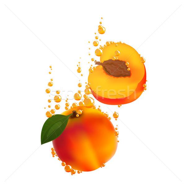 Vector Apricots Stock photo © RamonaKaulitzki