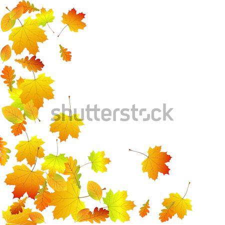 вектора осень лес природы завода Сток-фото © RamonaKaulitzki