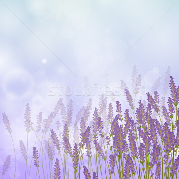 Vecteur lavande herbe nature jardin fond Photo stock © RamonaKaulitzki