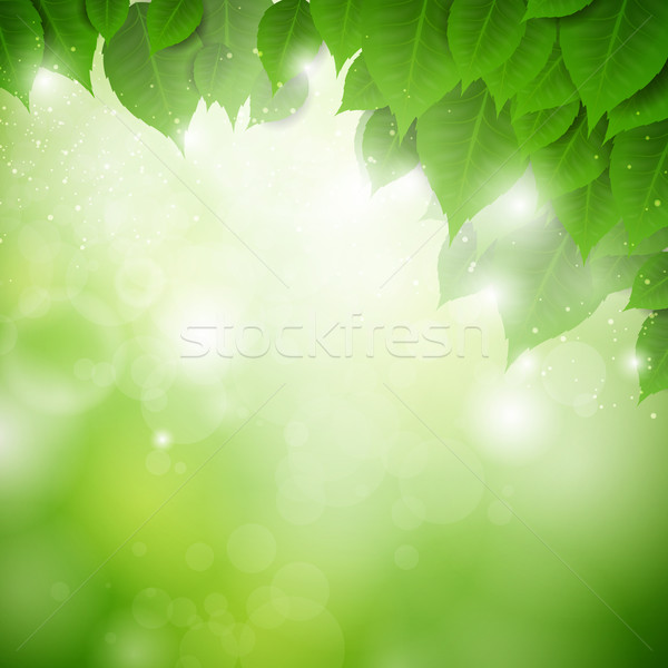 Vektör doğa yaprakları ağaç yaprak arka plan Stok fotoğraf © RamonaKaulitzki